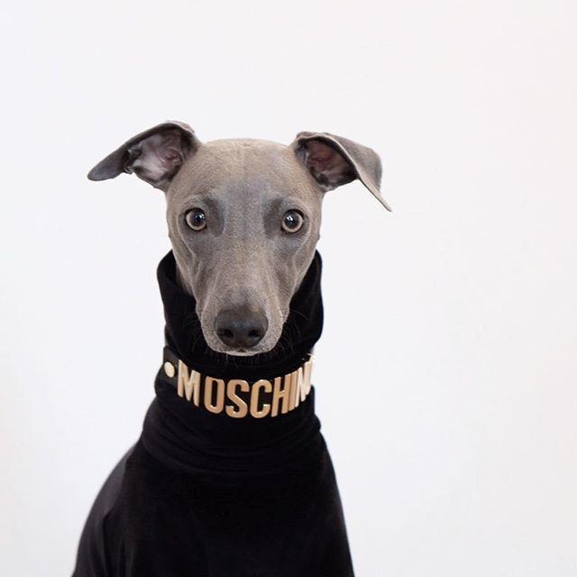 perro instagram