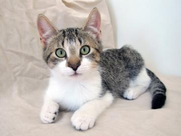 Cayden is Adopted!: Adoption Cat, Acre Adoption