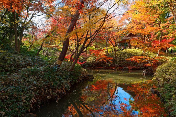 秋にしか見ることのできない絶景、紅葉。そんな紅葉は東京都内でも綺麗に色づき、私たちの心に癒しを与えてくれます。今回は、楽天トラベルの「東京の紅葉名所おすすめ15選!2017年ライトアップ情報も」を参考に東京都内の2017年オススメ紅葉名所まとめをご紹介します。(※掲載されている情報は2017年10月に公開したものです。必ず事前にお調べ下さい。)
