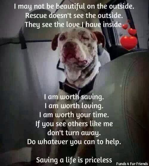 Every life is worth saving, and every animal deserves love and a happy forever home. Please Rescue, Please Adopt.