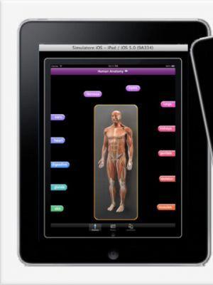 Anatomía humana  es principalmente el estudio científico de la morfología de la cuerpo humano. Anatomía se subdivide en la anatomía gruesa y la anatomía microscópica. Anatomía gruesa (también llamada anatomía topográfica, anatomía, o anthropotomy regional) es el estudio de las estructuras anatómicas que se pueden ver a simple vista.