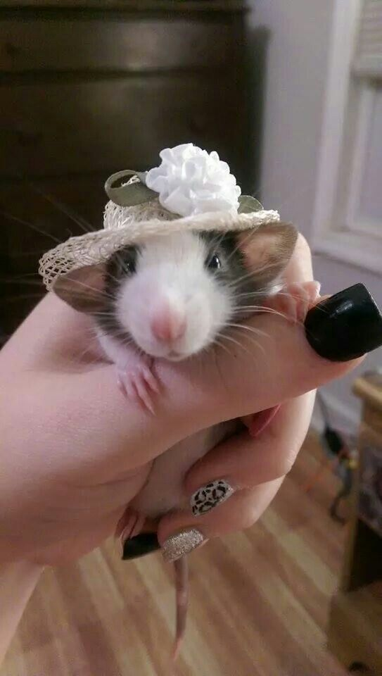 I usually disapprove of pets being dressed up. This is an exception. CUTEST!