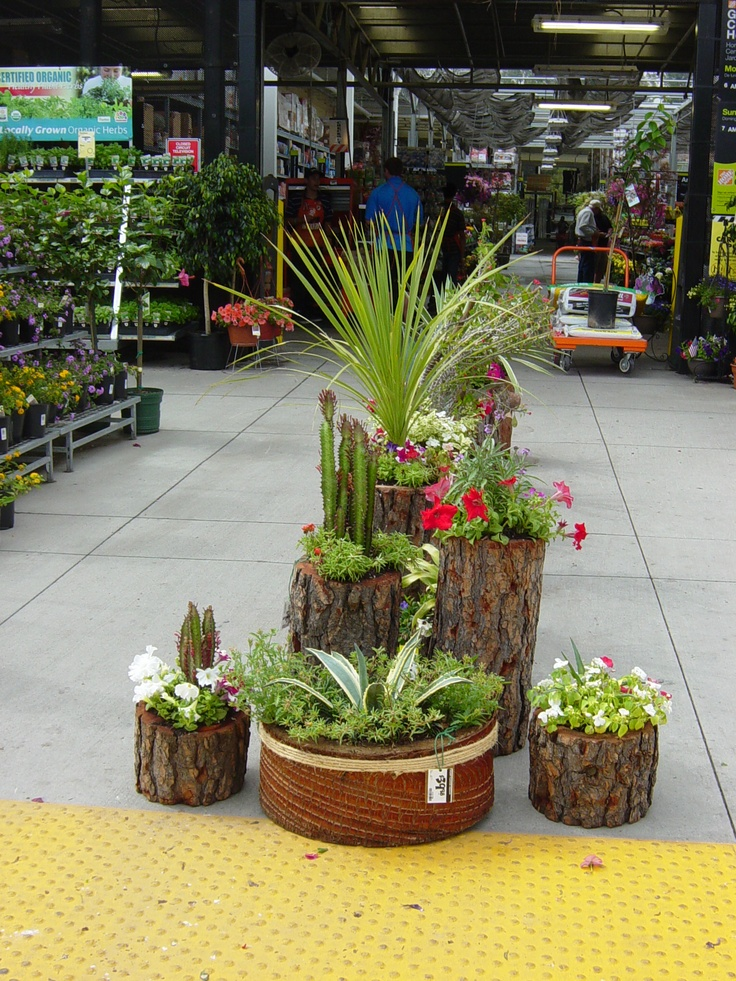 Stump Planters on display at a local hardware store.