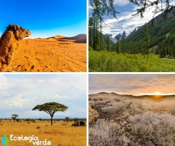 8 Tipos De Biomas Terrestres Características Ejemplos Y Fotos En 2021 Bioma Terrestre Biomas Fotos