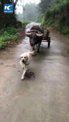 Farmer's Intelligent Dog 😎