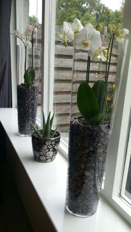 Orchideeen in een hoge vaas met grote grindstenen ♡