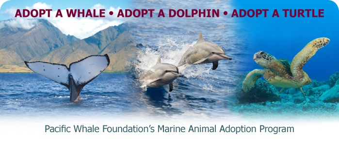 Adopt a marine life for your kids, grandkids.  They'll love getting mail about their adoptee!