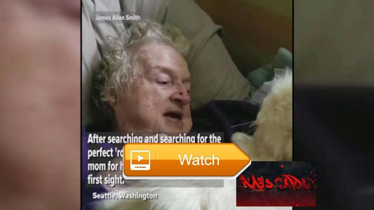 😸 Man buys robot cat for his mother with dementia 😹 Man gives his mother a robotic cat as a birthday gift after she was forced to give up…