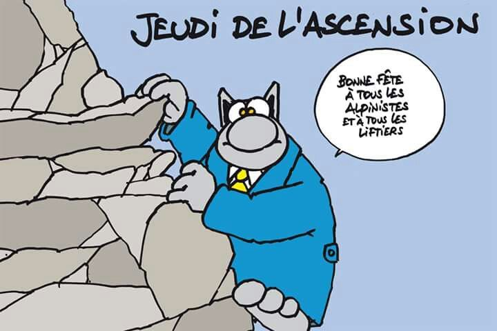 Jeudi de l 39 ascension le chat pinterest - Dessin chat humour ...