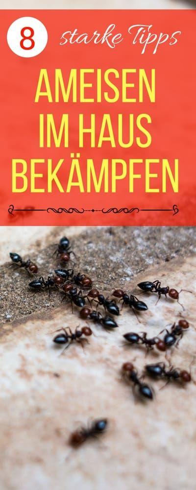 Hausmittel gegen Ameisen. Ameisen im Haus bekämpfen | Haushaltsfee.org