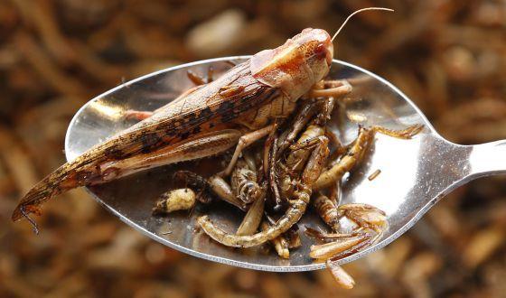 Insectos para picar La FAO llama a extender una dieta que ya sigue un tercio de los habitantes ante el aumento de la población mundial. Comer escarabajos es sostenible, barato y nutritivo. Otros creen que el hambre se acabaría distribuyendo bien los alimentos