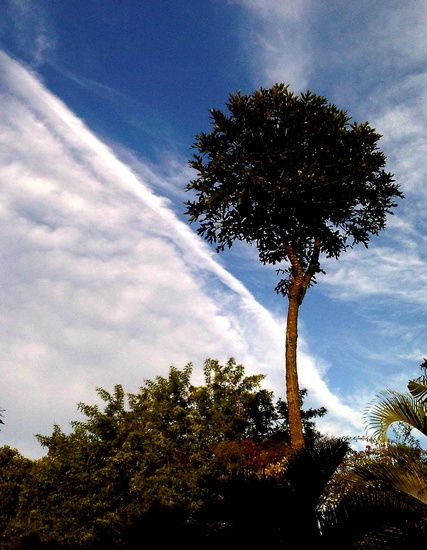 Clouds and a tree by Merle Ann · 365 Project