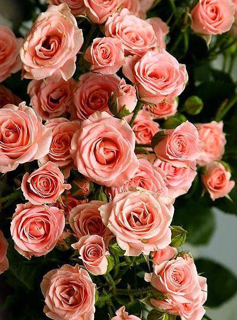 τριαντάφυλλα !!! #roses !!!