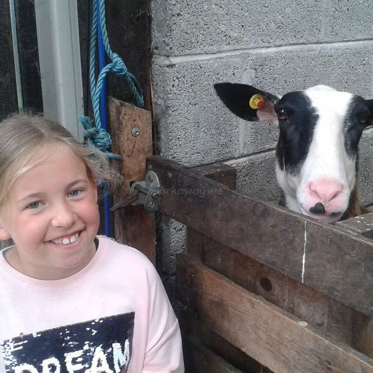Dairy sheep farming, cheese making and help around the house in West Cork