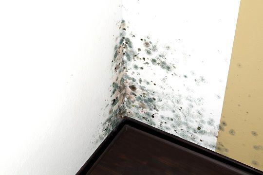 Como eliminar el moho de tu casa sin tóxicos El moho y los hongos en el hogar son un problema estético y de salud, muchos mohos que crecen en las paredes u otros sitios de la casa pueden ser tóxicos, pero claro si encima los quitamos con productos también tóxicos no tiene mucho sentido. Vamos a ver tres formas distintas para quitar el moho y que no vuelva. Con los años me he encontrado tres ingredientes naturales que matan el moho