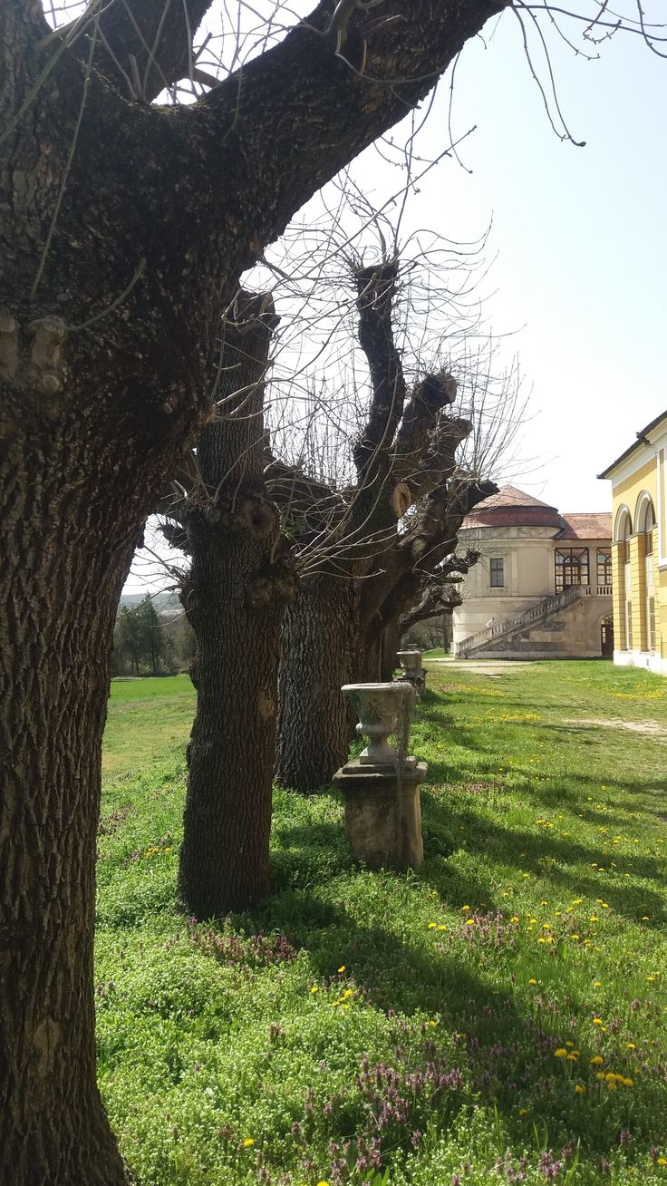 fasor / trees