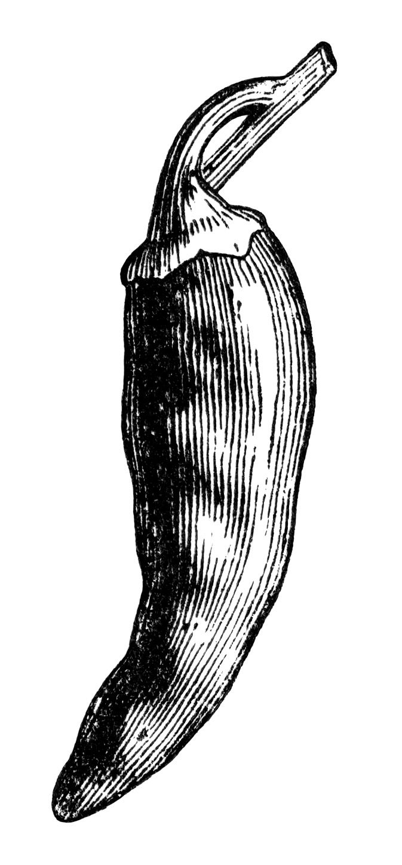 black and white clip art, bell pepper clipart, chili