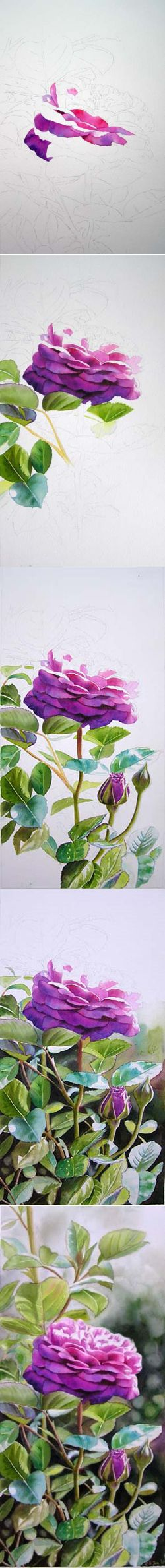 Painting Roses, Watercolor art instruction