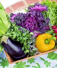 I nostri ortaggi appena raccolti