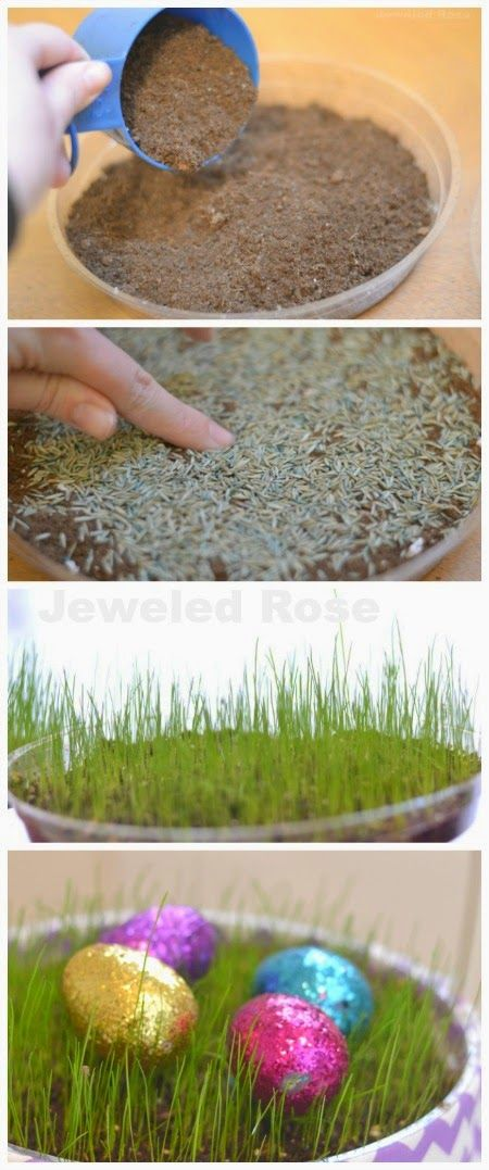 Growing Easter basket grass- a fun project for the kids!  My girls loved watering their grass and watching it grow. {This takes a few weeks so start a bit before Easter}