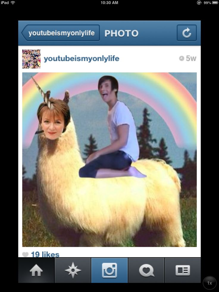 Fetus Dan Howell on a llama which has Delia Smith's face, which is also a unicorn. So many references