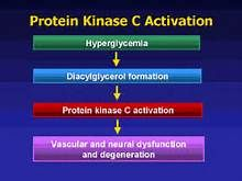 protein kinase c and diabetes - - Yahoo Image Search Results