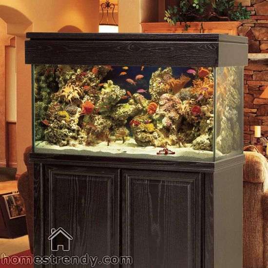 17 best aquarium ideas for fish and turtles. images on pinterest