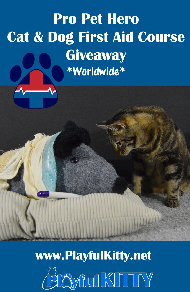 166 best cat health images on pinterest cat health kittens and pro pet hero cat dog first aid course giveaway