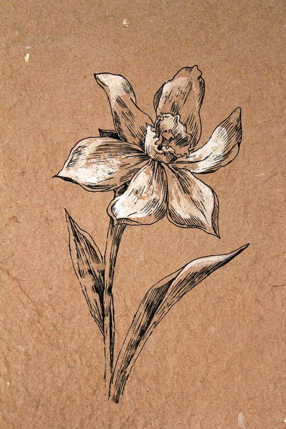Dibujo de la flor. Narciso blanco. Classis por AugustArtStudio