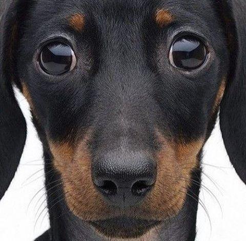 Todos los perros tienen una mente inocente. #albandco All dogs have an innocent mind. #perro #perros #dog #dogs #gos #instadog #doglovers #doggie #cutedog #hound #cachorro #犬 #adiestramiento #educacioncanina #dogtraining #instagramers #instagood #instadaily #dogsofig #perrosdeinstagram #ilovemydog