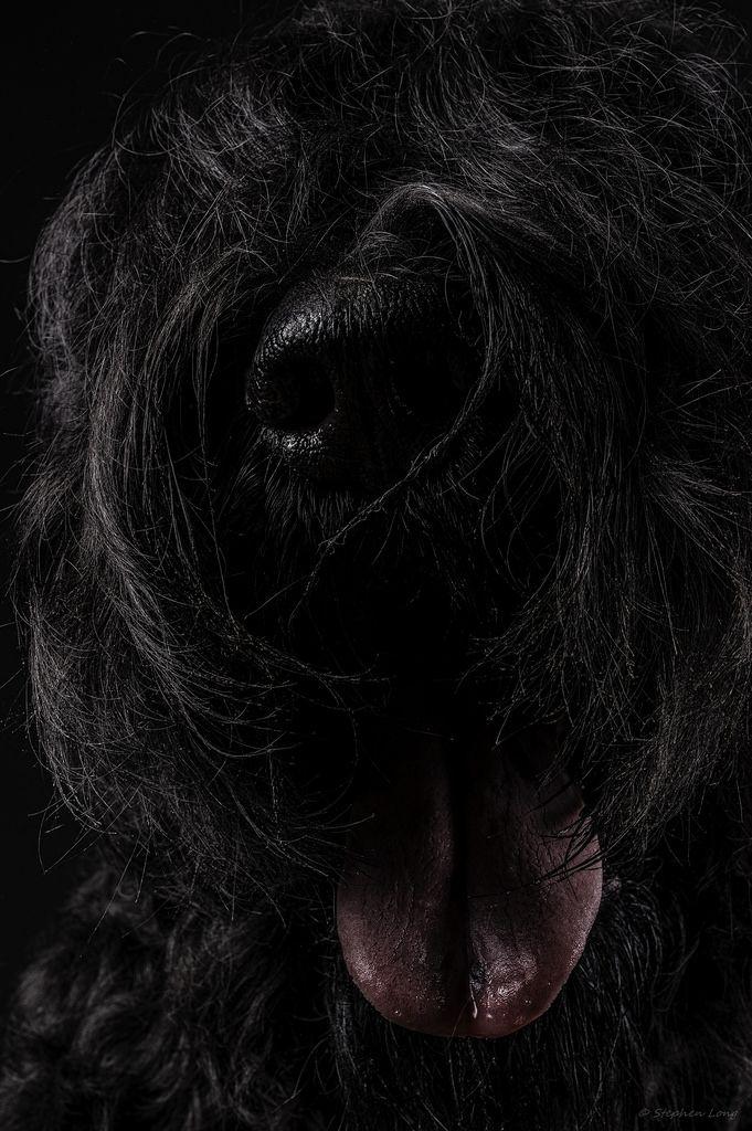 48 besten Hunde Bilder auf Pinterest | Schäferhunde, Hunde und ...