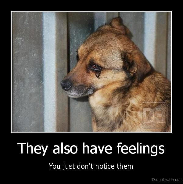 animal have feelings Do animals have feelings one of the hottest questions in the study of animal behaviour is, do animals have emotions the simple answer is, of course they do.