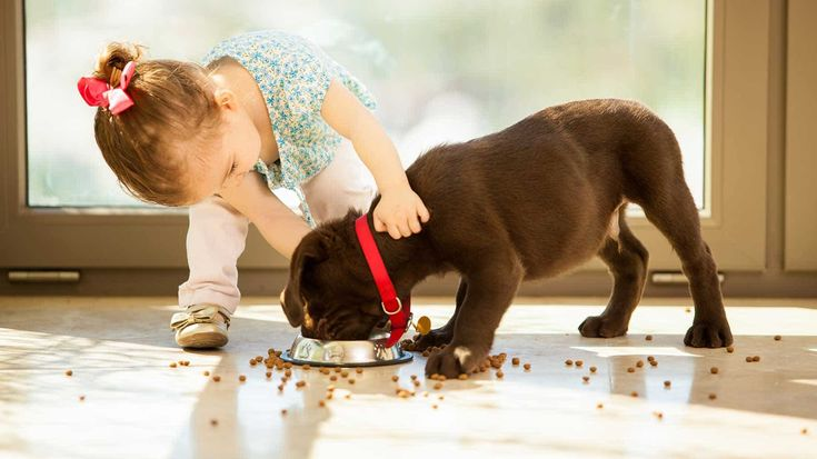 What to Feed Your Dog – Cheap, Healthy Dog Food Brands