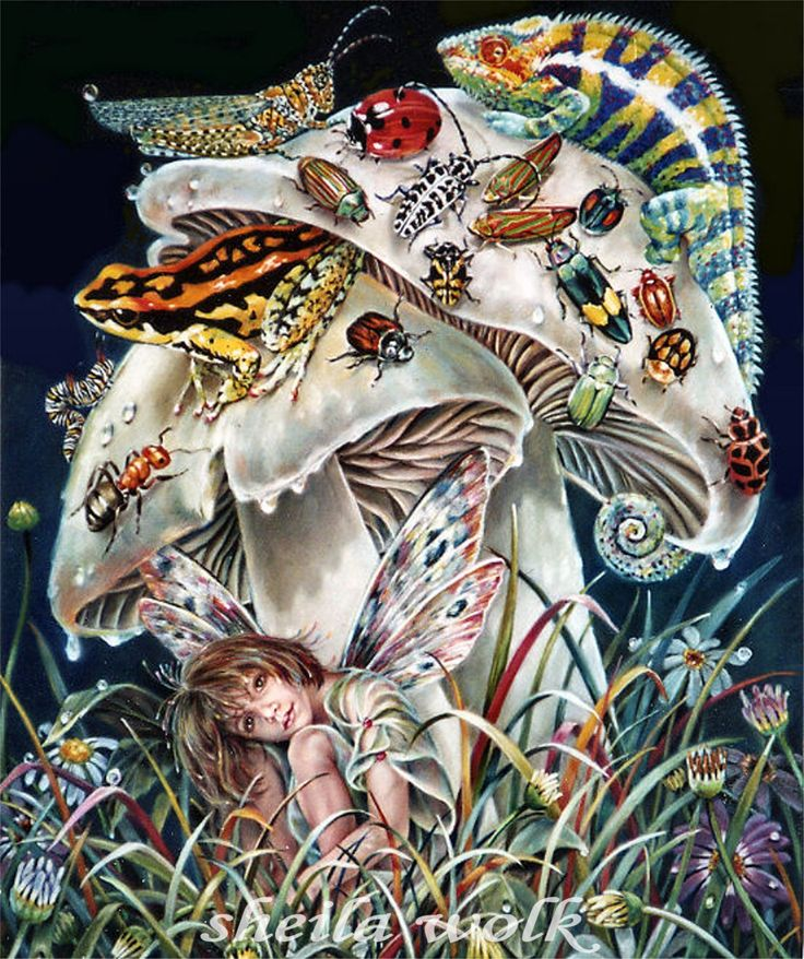 """dry spot"" art by sheila wolk #mushrooms #illustration"