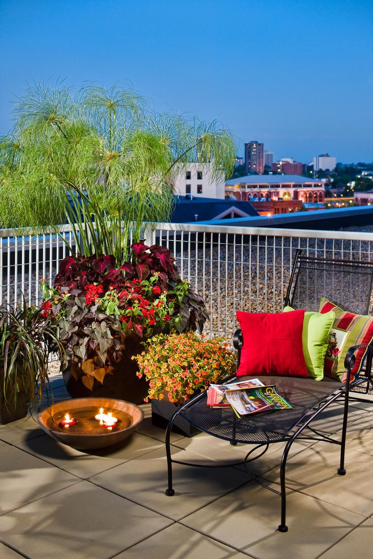 Balcony with King Tut (Ornamental Grass) in planter display...beautiful