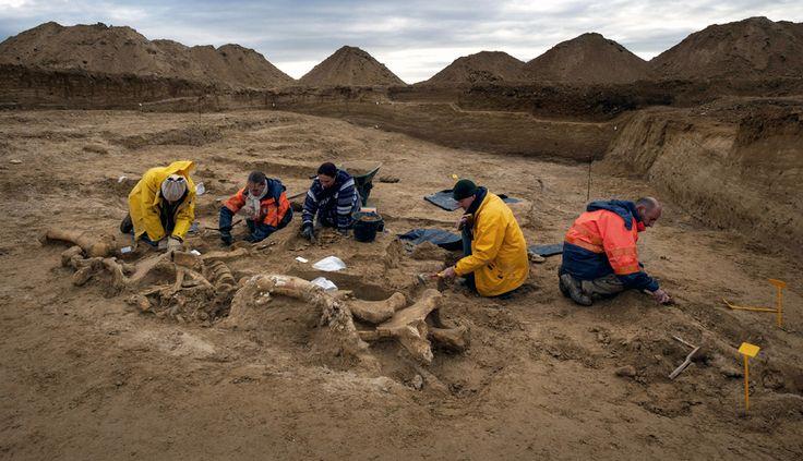 FOTOS: un esqueleto prácticamente entero de mamut fue descubierto en Francia