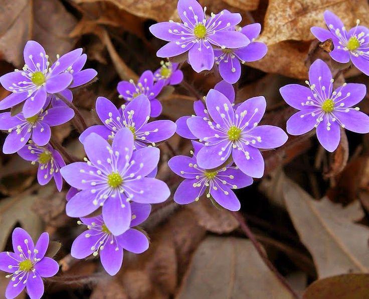 17 mejores ideas sobre flores ex ticas en pinterest - Flores mas bonitas ...
