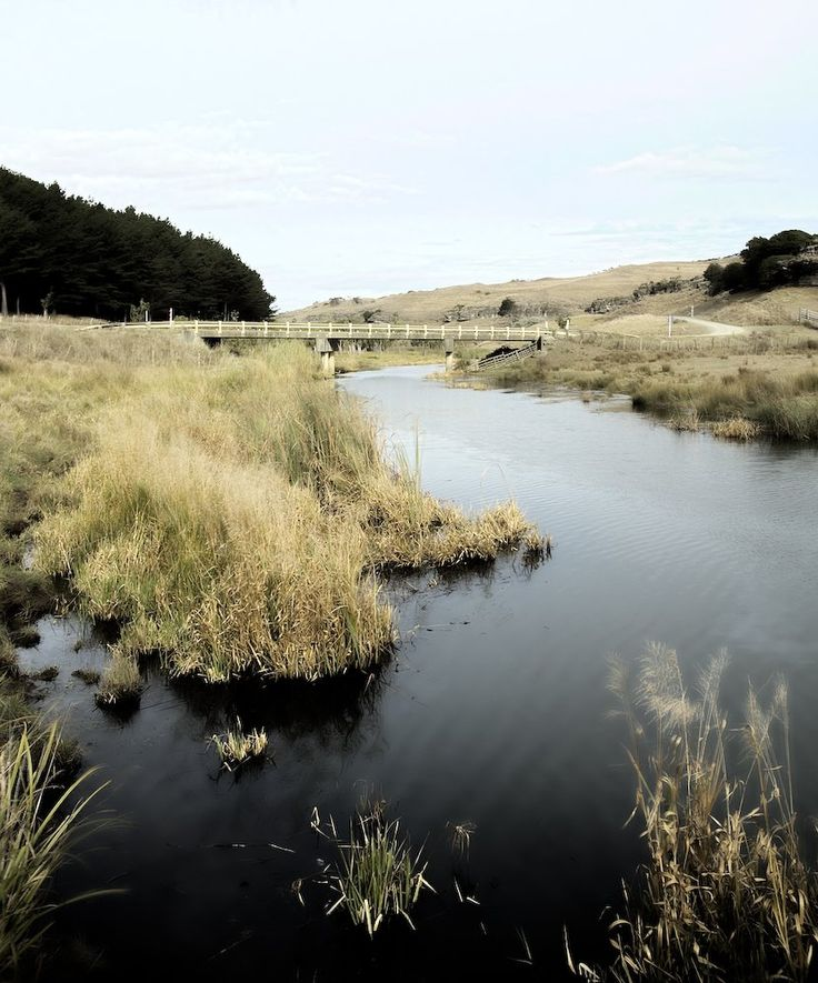 Black Water - Te Akau