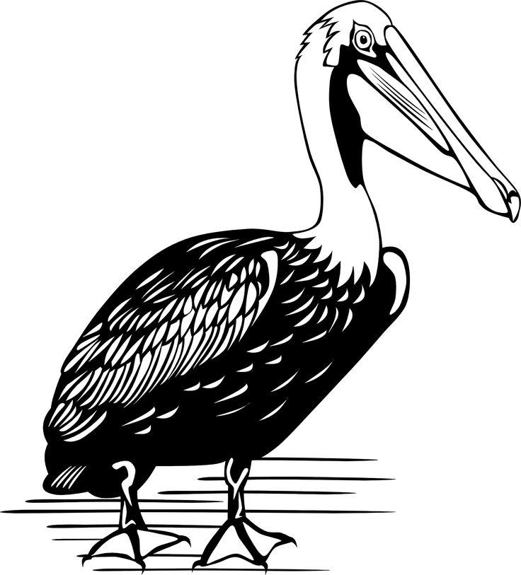 Pelican Bird Large Water transparent image