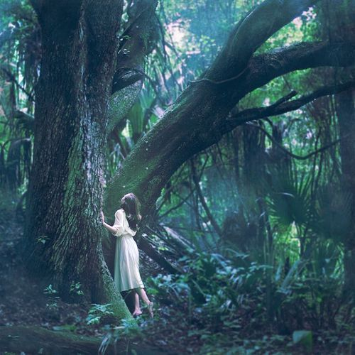 ♔ Enchanted Fairytale Dreams ♔: Forests, Dreams, Wood, Story Inspiration, Trees, Sleeping Giants, Fairytale