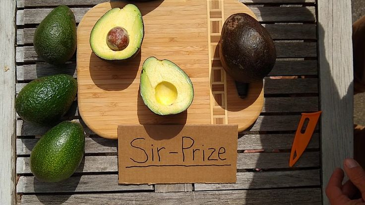 SirPrize avocado a profile YouTube in 2020 (With