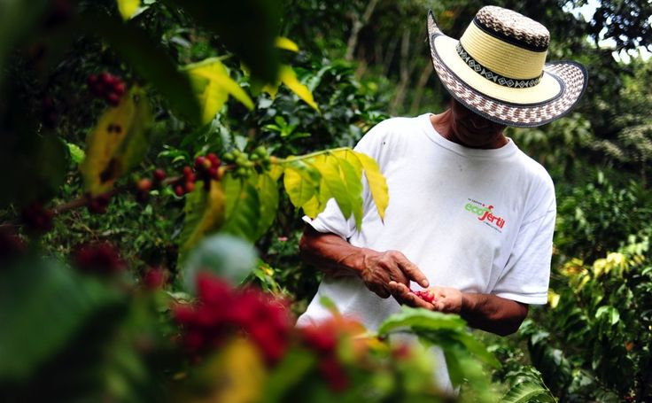 Coffee Farmers Only Get Paid Once A Year - http://modernfarmer.com/2015/04/coffee-farmers-only-get-paid-once-a-year/?utm_source=PN&utm_medium=Pinterest&utm_campaign=SNAP%2Bfrom%2BModern+Farmer