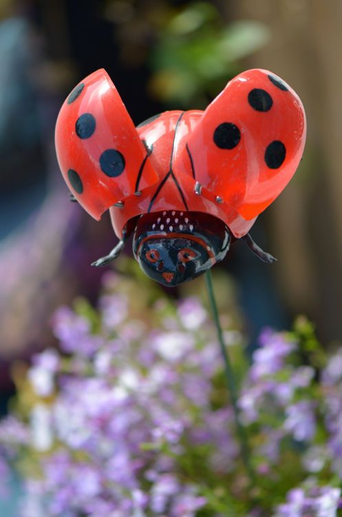 Ladybird getting ready for takeoff.  (Great timing to Photographer)