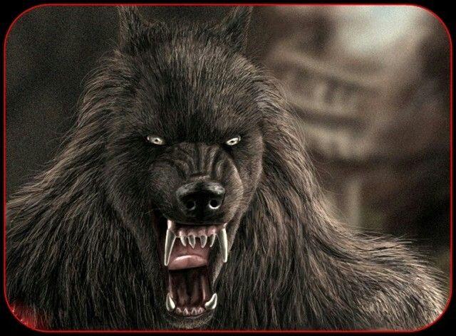 frankenstein meets the wolfman watch online Frankenstein meets the wolfman [vhs] [1943]: lon chaney jr, ilona massey, patrick knowles, lionel atwill, bela lugosi, maria ouspenskaya, roy william neill:.