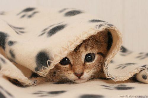 .: Kitty Cats, Cuteness, Sweet, Adorable Animals, Pets, Kittens, Kitties, Peek A Boo