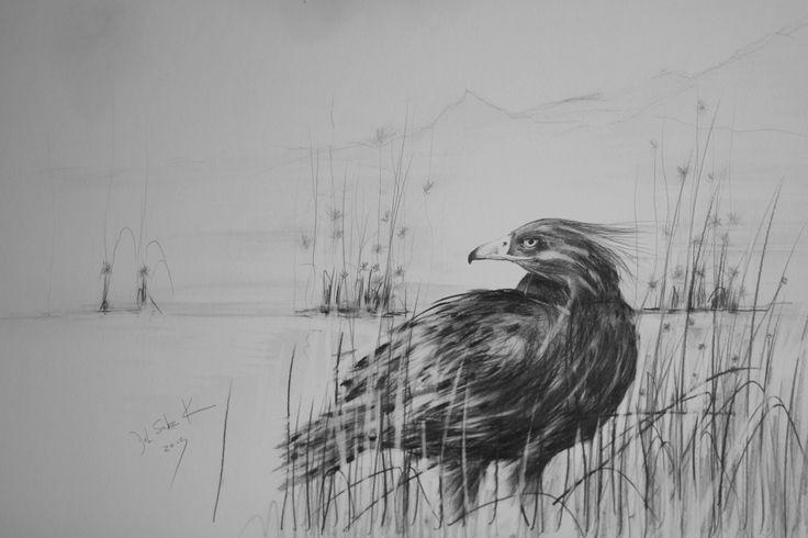 """Tah-Kloma, me dijo : """" Escucha, observa los sonidos emitidos por el Aguila Blanca, Aguila Real...tienen significados especiales para sus similares; para incitar, sosegar,alzar,atacar,atraer y alentar, un amplio lenguaje que indica el grado de placer, dolor,desconfianza, temor,odio... con practica y tiempo, puedes obtener la respuesta deseada de un Aguila...!!!..."""" ,con un sonido determinado, en momentos como estos, la atmofera se llena de exitacion...!!! y bajo la Luna de Hijo de Alce..."""