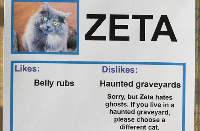 Les gifs de chatons, c'est très mignon. Mais adopter un bon gros chat en refuge, c'est mieux! Obvious Plant a conçu les annonces d'adoption les plus mignonnes de toute l'histoire des annonces d'adoption.
