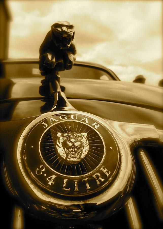 Jaguar Car Mascot What a Wild Cat!  See more of my Photographs at http://fineartamerica.com/featured/jaguar-car-mascot-john-colley.html