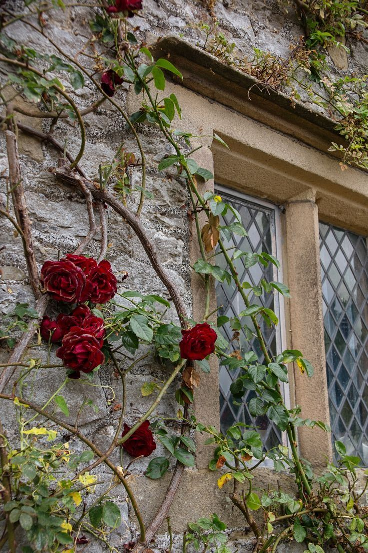 16 Space Saving Vertical Garden Ideas Rose Cottage Vertical Garden Briar Rose
