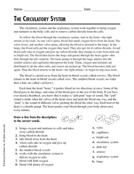 Circulatory System 5th Grade Worksheets   The Circulatory System 4th  5th Grade Worksheet